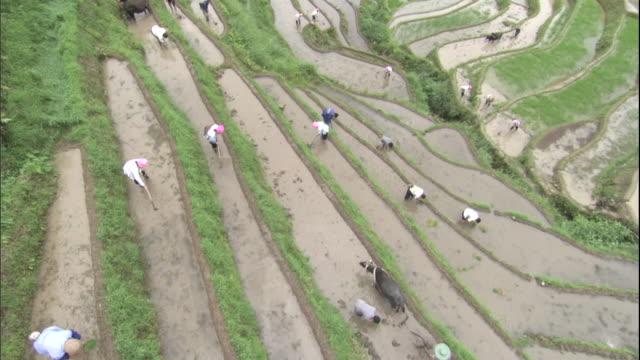 HA WS ZIP Farm workers working in terraced fields/ Guangxi Region, China