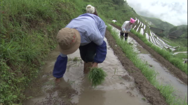 ms farm workers working in terraced fields/ tu pan ha ws terraced landscape with farm workers/ guangxi region, china - rice terrace stock videos and b-roll footage