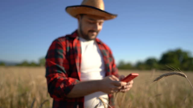 landwirt analysiert erntequalität am telefon - one young man only stock-videos und b-roll-filmmaterial