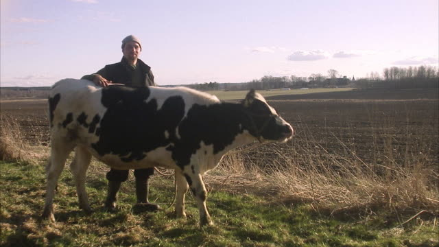 a farmer and a cow sweden. - hausrind stock-videos und b-roll-filmmaterial