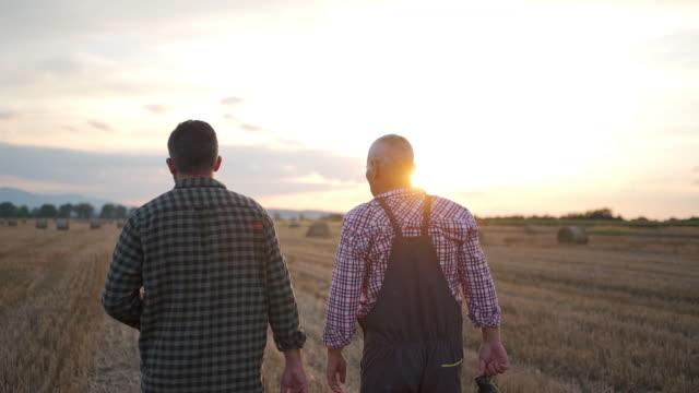 en bonde och en agronom går genom ett vetefält vid solnedgången - agricultural field bildbanksvideor och videomaterial från bakom kulisserna
