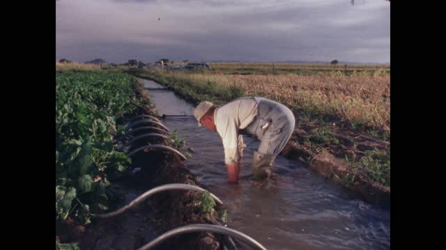 vídeos y material grabado en eventos de stock de farmer and dog working on irrigation channel - campesino