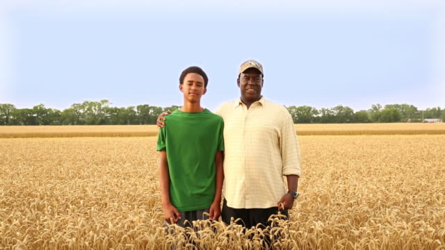 stockvideo's en b-roll-footage met ms ds farmer and grandson standing in field of wheat / oyster, virginia, usa - virginia amerikaanse staat