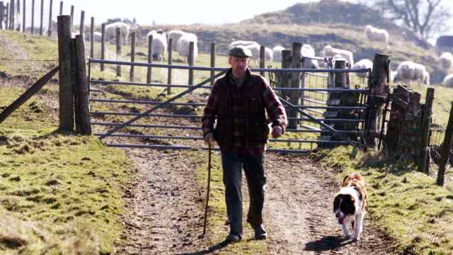 farmer and his dog - british culture stock videos & royalty-free footage