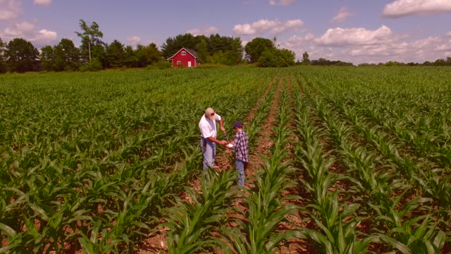 farmer and his son inspect ripening field of corn - offspring stock videos & royalty-free footage