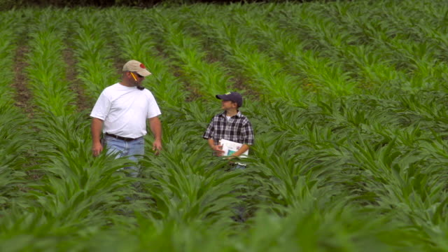 farmer and his son inspect ripening field of corn - one parent stock videos & royalty-free footage