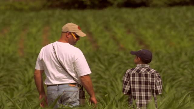 stockvideo's en b-roll-footage met farmer and his son inspect ripening field of corn - kindertijd
