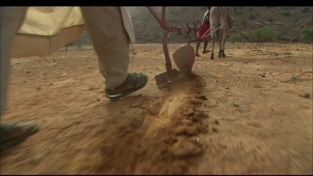 a farmer and his son plow a field using a donkey. available in hd. - 家畜点の映像素材/bロール