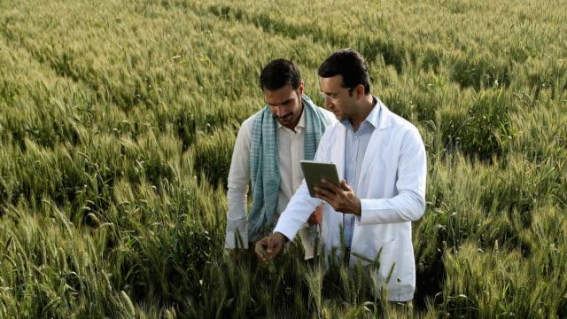 vídeos de stock, filmes e b-roll de ws cs farmer and scientist examining wheat field with digital tablet / samalkha, haryana, india - neckwear