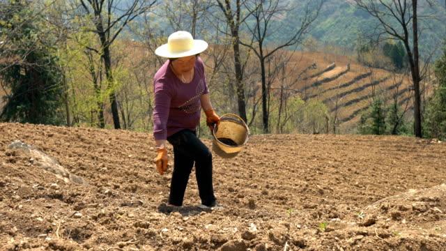 farmer apply chemical fertilizer in field,china. - fertilizer stock videos & royalty-free footage