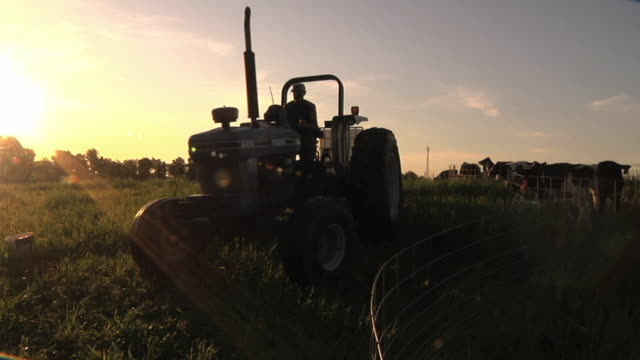 WS SLO MO Farmer arrives with fresh water for calves that are fenced in organic pasture / Columbus, Wisconsin, USA
