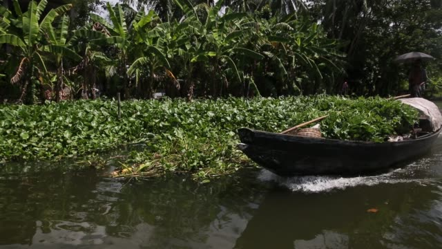a farmer at a floating garden on october 25 in dhaka bangladesh floating gardens allow farmers to grow crops throughout the year even when it floods... - small business stock videos & royalty-free footage