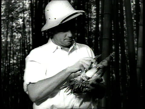 1939 cu farmer at barbour lathrop plant farm opens bamboo bud with knife / savannah, georgia, usa - bamboo plant stock-videos und b-roll-filmmaterial