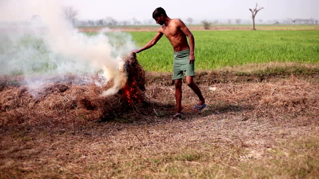 landwirt rasen brennen - nackter oberkörper stock-videos und b-roll-filmmaterial