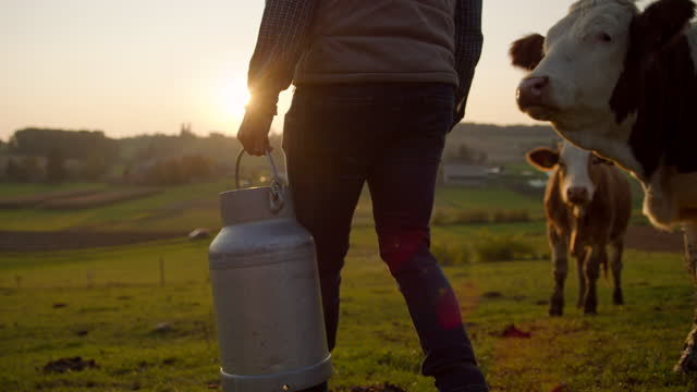 slo mo farmer carrying a barrel full of milk across the pasture - female animal stock videos & royalty-free footage