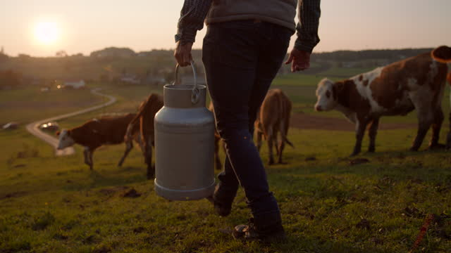 slo mo farmer carrying a barrel of milk on the pasture - milk stock videos & royalty-free footage