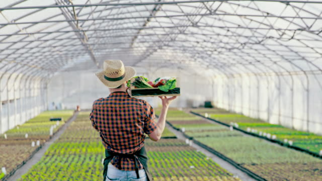 slo mo ds farmer carrying crate full of vegetables in the greenhouse - peperone dolce video stock e b–roll