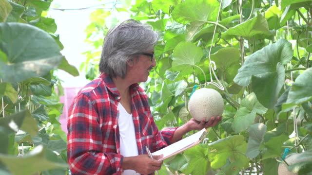 農家はメロンの品質をチェックし、チェックリストでタッチ - サービス業関係の職業点の映像素材/bロール