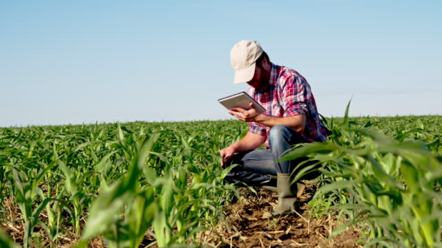 LS DS Farmer Checking Plants With A Digital Tablet
