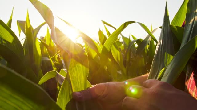 CU Landwirt Überprüfung der Mais