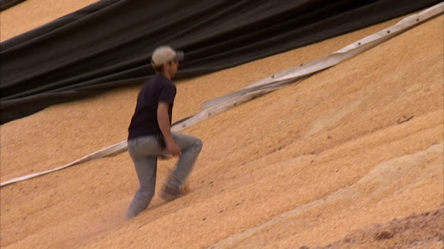 a farmer climbs a pile of corn to adjust rags of a tarp torn by the wind. - 防水シート点の映像素材/bロール