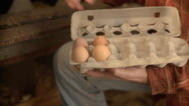 ms pan farmer collecting eggs from nest box / wilmington, illinois, usa  - chicken coop stock videos & royalty-free footage