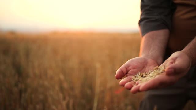 農家は彼の畑で収穫を制御しました - 種点の映像素材/bロール