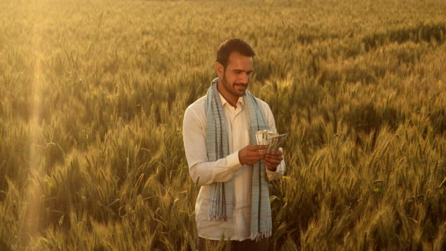 ms cs farmer counting money in a wheat field / samalkha, haryana, india - counting stock videos & royalty-free footage