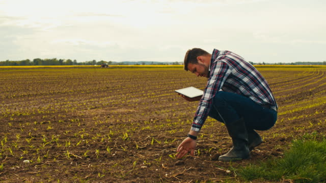ws slo mo farmer crouching in field and using tablet - plaid shirt stock videos & royalty-free footage