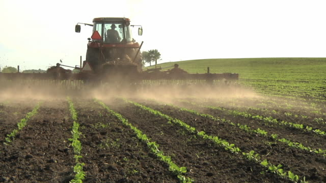 ws tu farmer cultivating soybean field at organic farm / columbus, wisconsin, usa - soya bean stock videos & royalty-free footage
