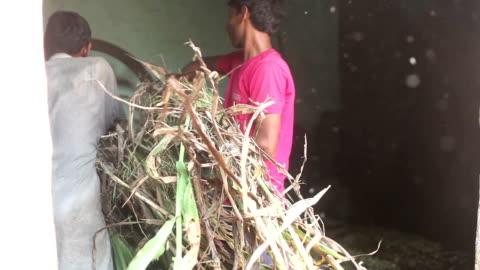 landwirt schneiden silage mit spreu cutter - sorghum stock-videos und b-roll-filmmaterial
