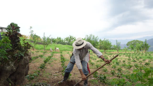 farmer digging a hole with a shovel to plant coffee - lavoratore agricolo video stock e b–roll