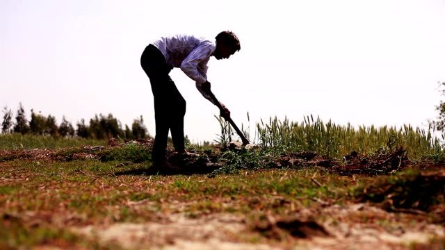 farmer digging in the field using hoe - lavoratore agricolo video stock e b–roll