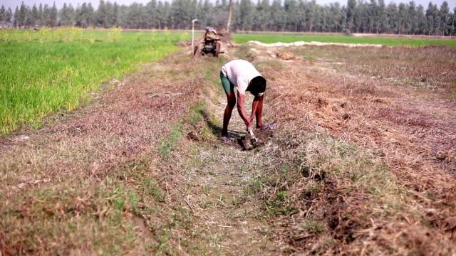 vídeos y material grabado en eventos de stock de campesino cavando en el campo - herramienta de mano