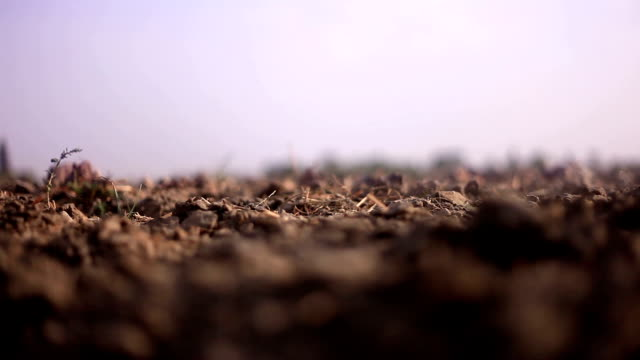 farmer digging in the field - digging stock videos & royalty-free footage