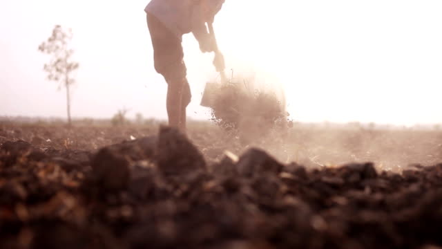 farmer digging in the field - digging stock videos and b-roll footage
