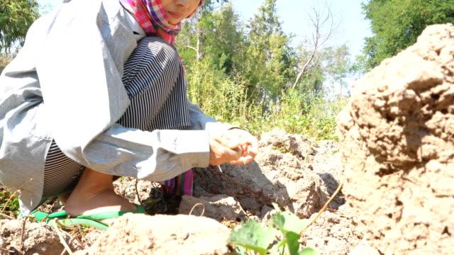 vídeos de stock, filmes e b-roll de o fazendeiro escava um jardim vegetal - só uma mulher de idade mediana