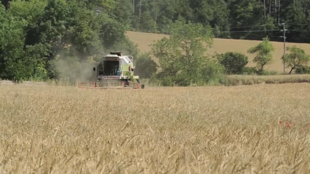 a farmer drives a claas dominator 98 combine harvester through a field during a barley harvest in cervera barley grain pours from a claas dominator... - orzo video stock e b–roll