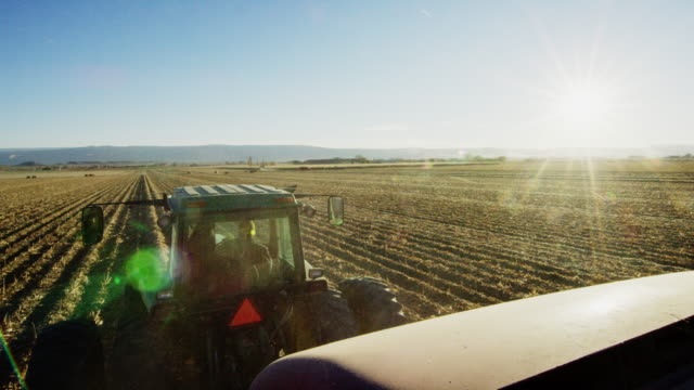 a farmer drives his tractor through a corn field at harvest with mountains in the background under a clear, blue sky - tractor stock videos & royalty-free footage