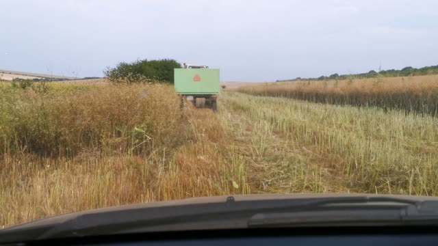 pov. farmer driving through the agricultural field during harvesting behind a tractor with a trailer going to the oilseed rape field at harvest season. agricultural occupation. farm owner. - agricultural occupation stock videos & royalty-free footage