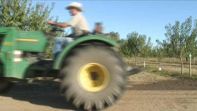 MS, Farmer driving tractor through orchard, California, USA