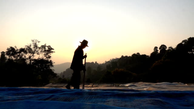farmer drying coffee seed slow motion - indigenous culture stock videos & royalty-free footage