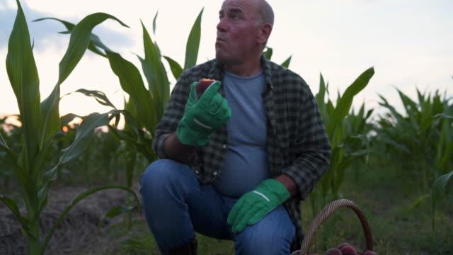 vídeos y material grabado en eventos de stock de agricultor comiendo frutas de su tierra - hombres adultos