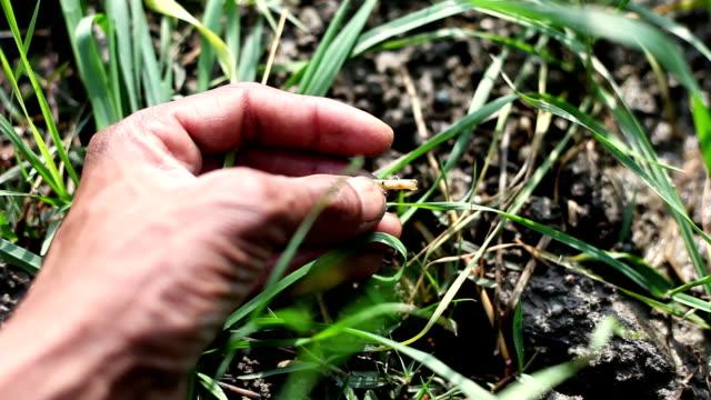 農家が作物を調べる - 農学者点の映像素材/bロール
