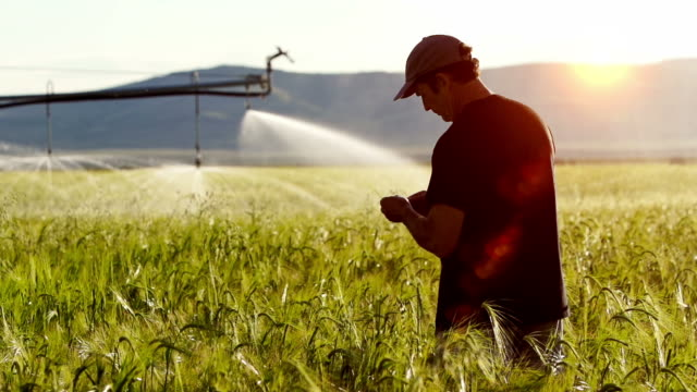 farmer examines crop - spraying stock videos and b-roll footage