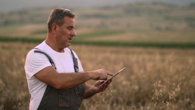 farmer examinig wheat field status with digital tablet - agricoltore video stock e b–roll