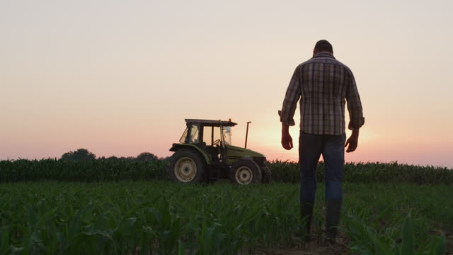 la farmer examining plants on a field at sunset - tractor stock videos & royalty-free footage