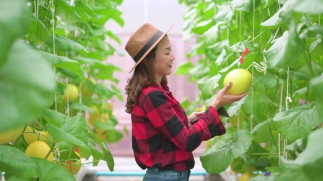 デジタルタブレットを使って植物を調べる農家 - 園芸学点の映像素材/bロール