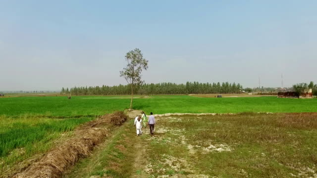 Farmer family working in the field