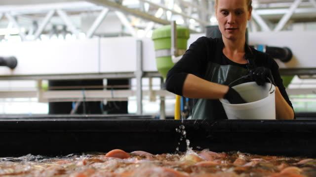 Agriculteur, nourrir les poissons à la ferme piscicole